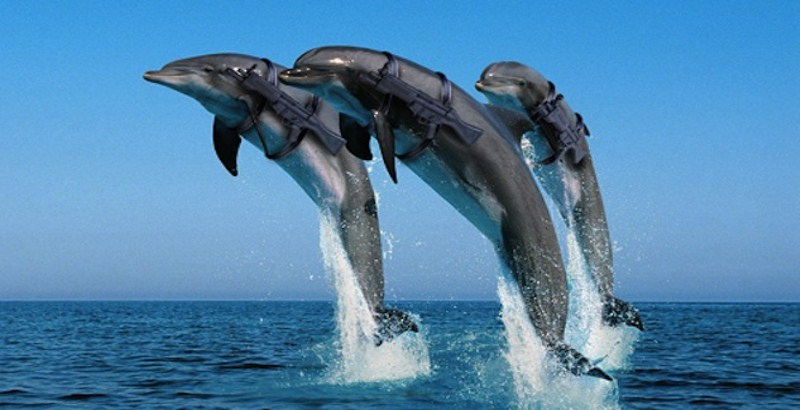 Russia's Defense Ministry to buy five dolphins