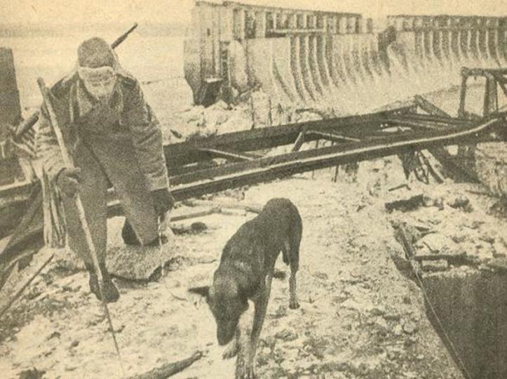 Famous Bomb Detection Dog - Julbars