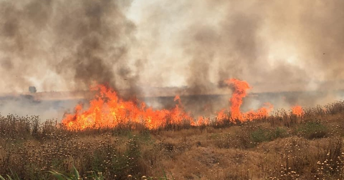SDF Denies Responsibility For Crops Fires, Accuses Turkish-Backed Militants