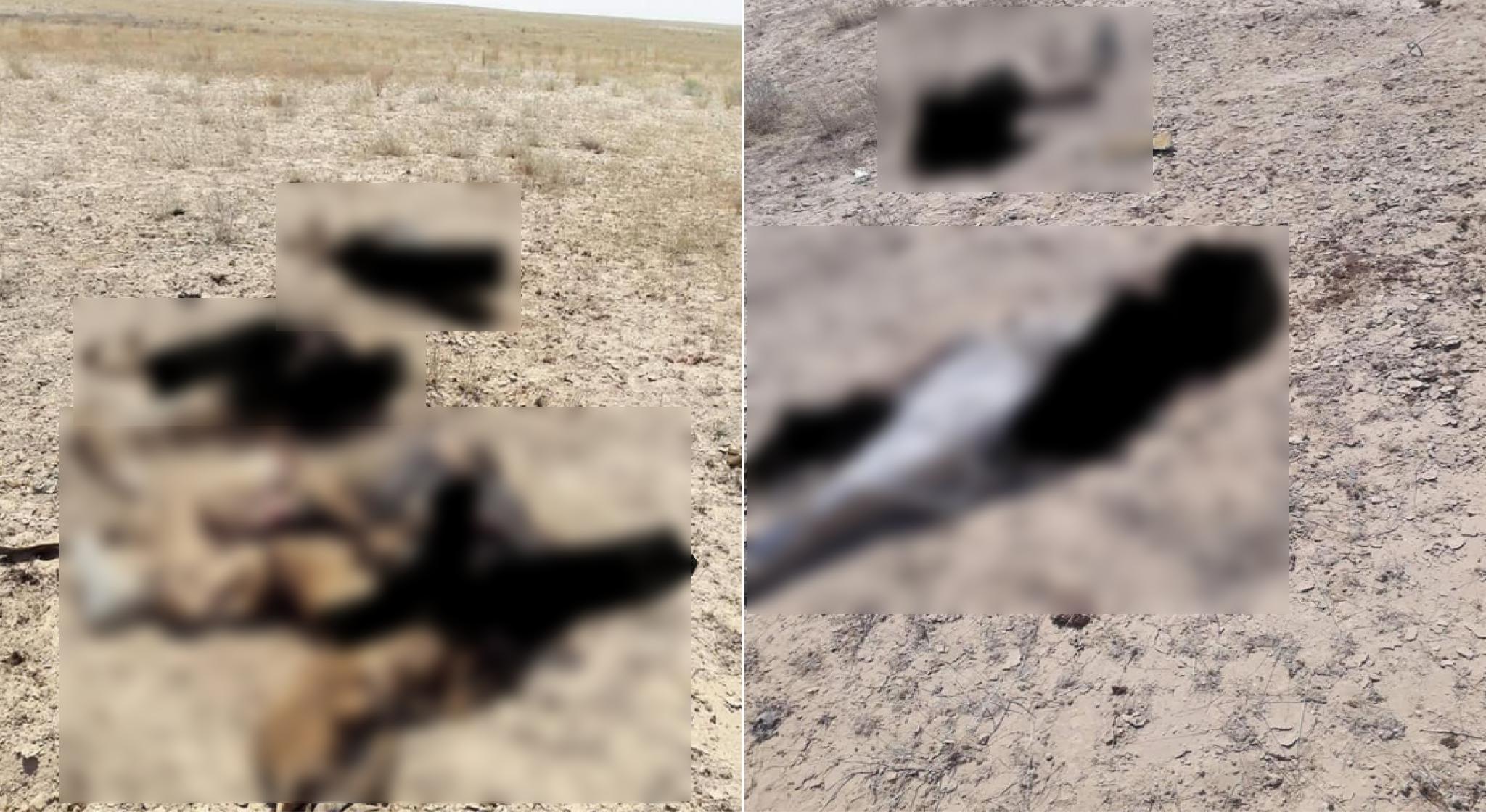 Iraqi PMU Eliminates Several ISIS Suicide Bombers On Border With Syria (Photos)