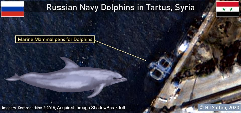 Additional Satellite Images Suggest Russia Used Trained Dolphins In Syria's Tartus Port