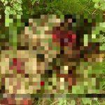 Horrifying Photos Document Recent ISIS Ambush In Northeastern Nigeria
