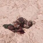 ISIS Terrorists Wreak Havoc In Southern Niger (Photos)