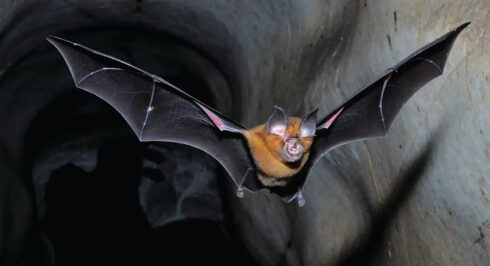 Wuhan Scientists Planned To Release 'Chimeric Covid Spike Proteins' Into Bat Populations Using 'Skin-Penetrating Nanoparticles'